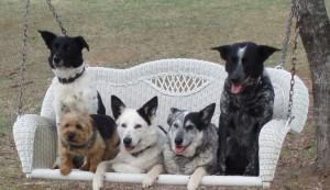 dogs on swing
